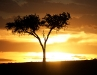 Masai Mara Sunset 1
